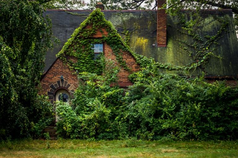 Abandoned Overgrown Fairy House