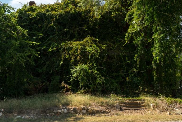 Abandoned Overgrown School