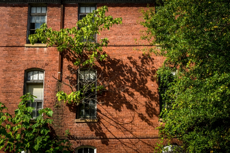 Tree Grows From Window of an Abandoned School